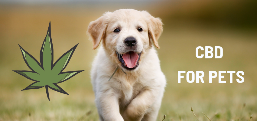 Happy purebred puppy romping toward viewer, with graphic cannabis leaf image.