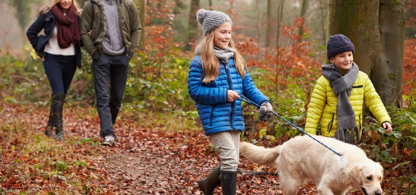 Family teaching purebred dog leash etiquette