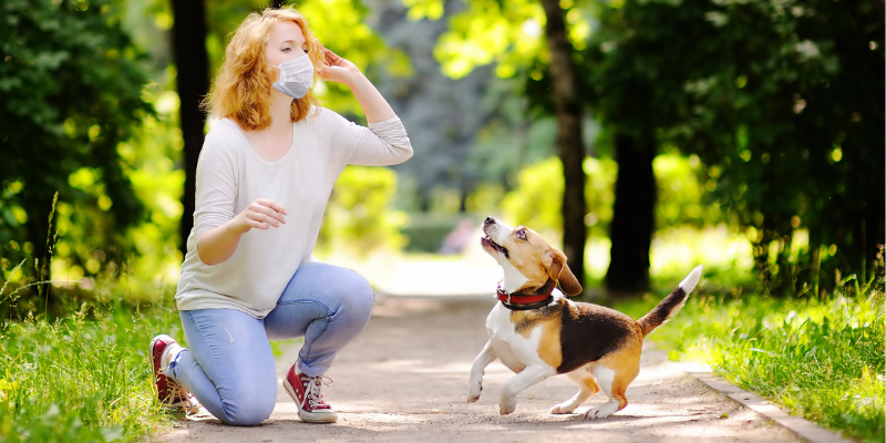 Woman with mask playing fetch with her Beagle.